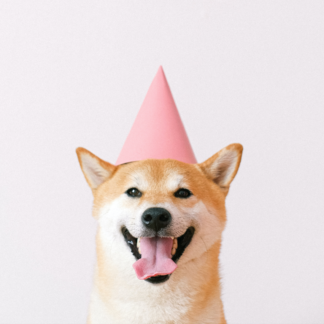 shiba inu in pink party hat